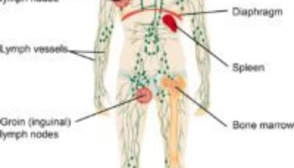 Lymphatic_System (new)